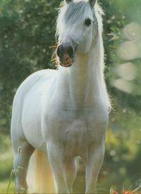 Kalendarz 2013 RW 22 Konie w obiektywie